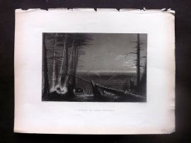 Bartlett America C1840 Antique Print. A Forest on Lake Ontario, USA.